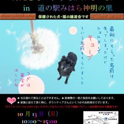 犬と猫のあたらしいおうちがほしいよin道の駅みはら神明の里vol.8