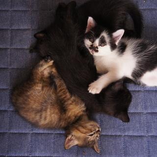8月15日生まれの可愛い子猫の里親募集