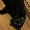 もっちり体型な♩♩何されても動じない黒猫なずくん