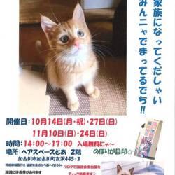 猫の譲渡会「加古川」