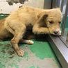 生後2ヶ月程度の野犬の子 オス 119