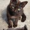 黒子猫ちゃん 家族になって下さい