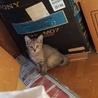 ガリガリ痩せた小さめな母猫と仔猫3匹います。
