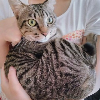 甘えん坊の元気な子猫です