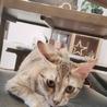急募!!生後5ヶ月目の美猫です☆