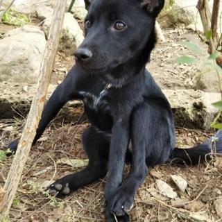 中型犬MIX、チビコ(メス)