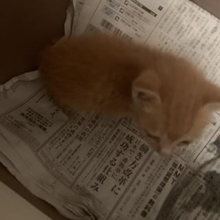 可愛い子猫です