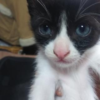 子猫2ヶ月