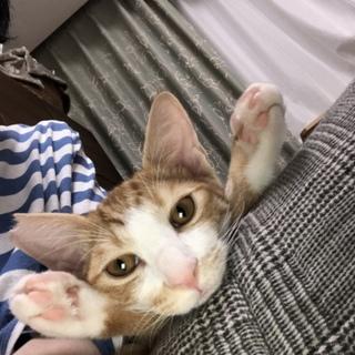お膝にのるのが大好き ルフィー君