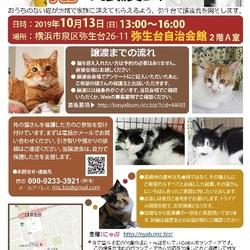 横浜市泉区で猫の譲渡会