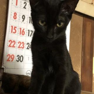 足をケガしていた小さな黒猫【グッチ君】♂