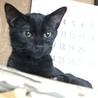 足をケガしていた小さな黒猫【グッチ君】♂ サムネイル2