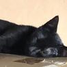 足をケガしていた小さな黒猫【グッチ君】♂ サムネイル3