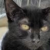 足をケガしていた小さな黒猫【グッチ君】♂ サムネイル5