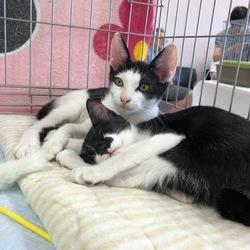 おうちねこの会静岡「子猫成猫譲渡会」