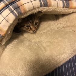 サンぺいくんの寝床探し