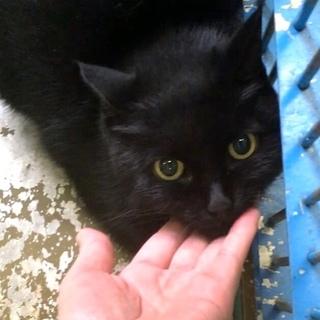 穏やかな黒猫 触れます