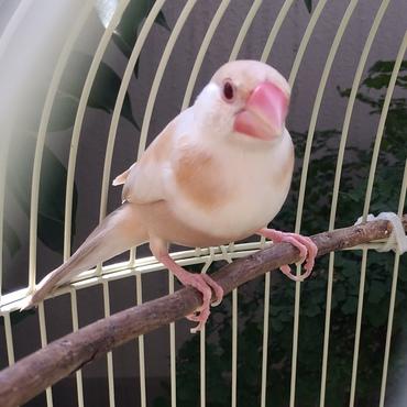 病気療養中。羽根が上手に生え変わらなくてちょっと辛かったね。