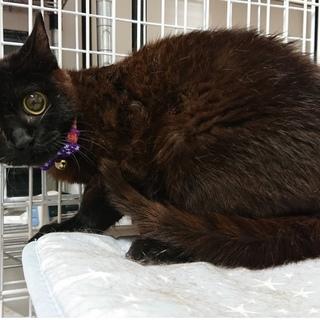 6ヶ月位 黒猫の女の子 ランラン
