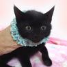 なれなれ黒子猫☆ペガくん 2ヵ月