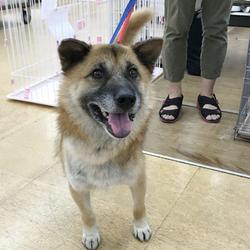 さいたま市 新都心東広場(コクーン側)「保護ねこ・保護犬譲渡会」14時~開催 サムネイル2