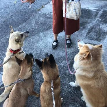 元野犬たちの朝の風景、合図でお座り&待て