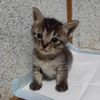徳島市の不動にいた子猫3兄妹①