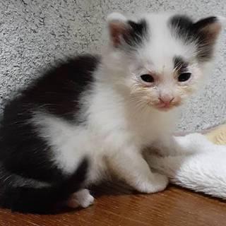 徳島市の不動にいた子猫3兄妹②