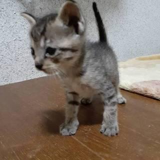 徳島市の不動にいた子猫3兄妹③