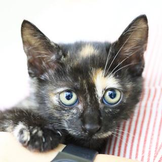 抱っこ大好き♡サビ猫「なおみ」は瞳のきれいな女の子