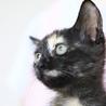 抱っこ大好き♡サビ猫「なおみ」は瞳のきれいな女の子 サムネイル2