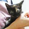 抱っこ大好き♡サビ猫「なおみ」は瞳のきれいな女の子 サムネイル3