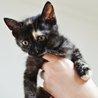 抱っこ大好き♡サビ猫「なおみ」は瞳のきれいな女の子 サムネイル4