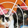 抱っこ大好き♡サビ猫「なおみ」は瞳のきれいな女の子 サムネイル6