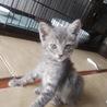 人懐っこくて仕草がかわいい子猫 9月29日に保護