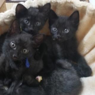 可愛い黒猫?兄弟