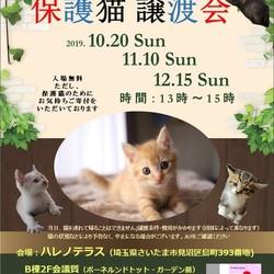 10/20(日)ハレノテラス 保護猫譲渡会