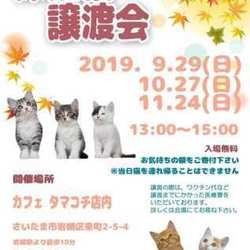 10/27(日)保護猫譲渡会IN タマコチ