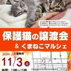 11/3 保護猫の譲渡会&くまねこマルシェ
