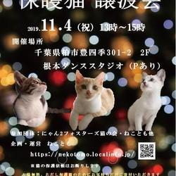 11/4(祝)猫カフェ風保護猫譲渡会
