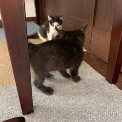 (中止)保護猫&保護犬の譲渡会 サムネイル3