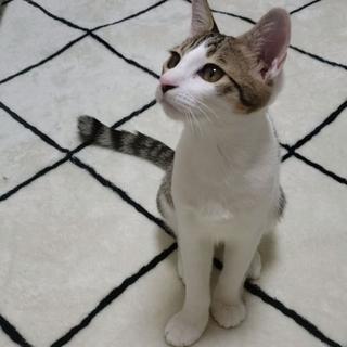 【トライアル中】人間も猫も大好き美形サーシャ君