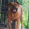 大型犬ですが性格花マルです❣️ サムネイル7
