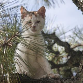 三毛猫の仔猫です