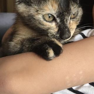 人が恋しいサビ子猫ハルコちゃん