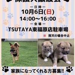 保護犬譲渡会開催!!!