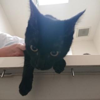 イケメン黒猫★となみ★元気な甘えん坊