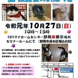 静岡市清水区にて猫の譲渡会開催です