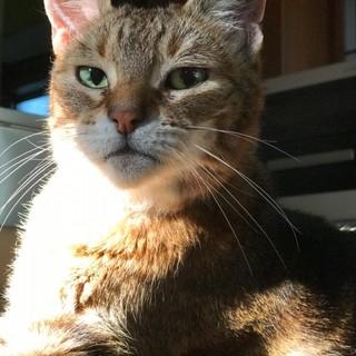 のんびり甘えん坊。大きな猫さんです。