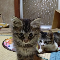猫の里親会 in 日立市 茨城